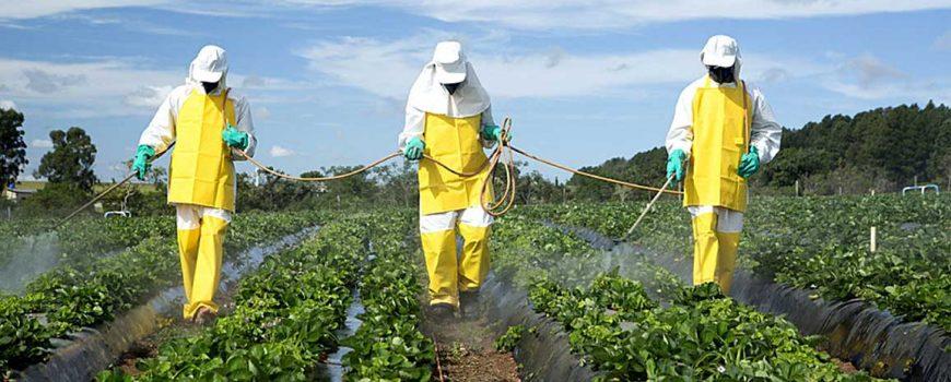 L'agriculture industrielle et la consommation de viande sont les causes majeures de l'effondrement du vivant